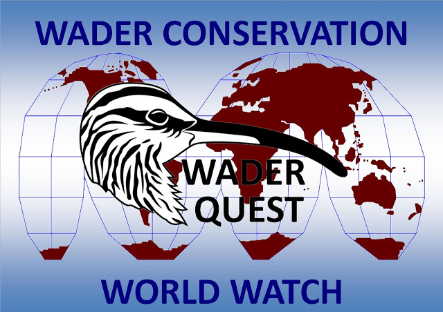 Wader Conservation World Watch