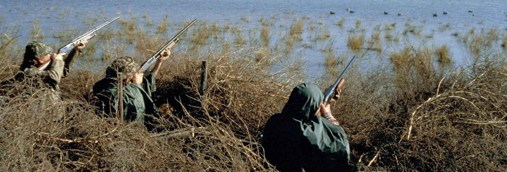 Threats to Waders - Hunting