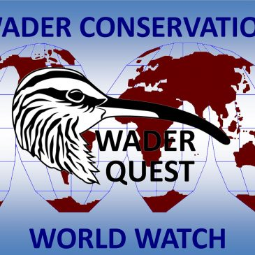 Wader Conservation World Watch 5 special newsletter now available