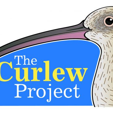 VWSG Far Eastern Curlew update #5 now available
